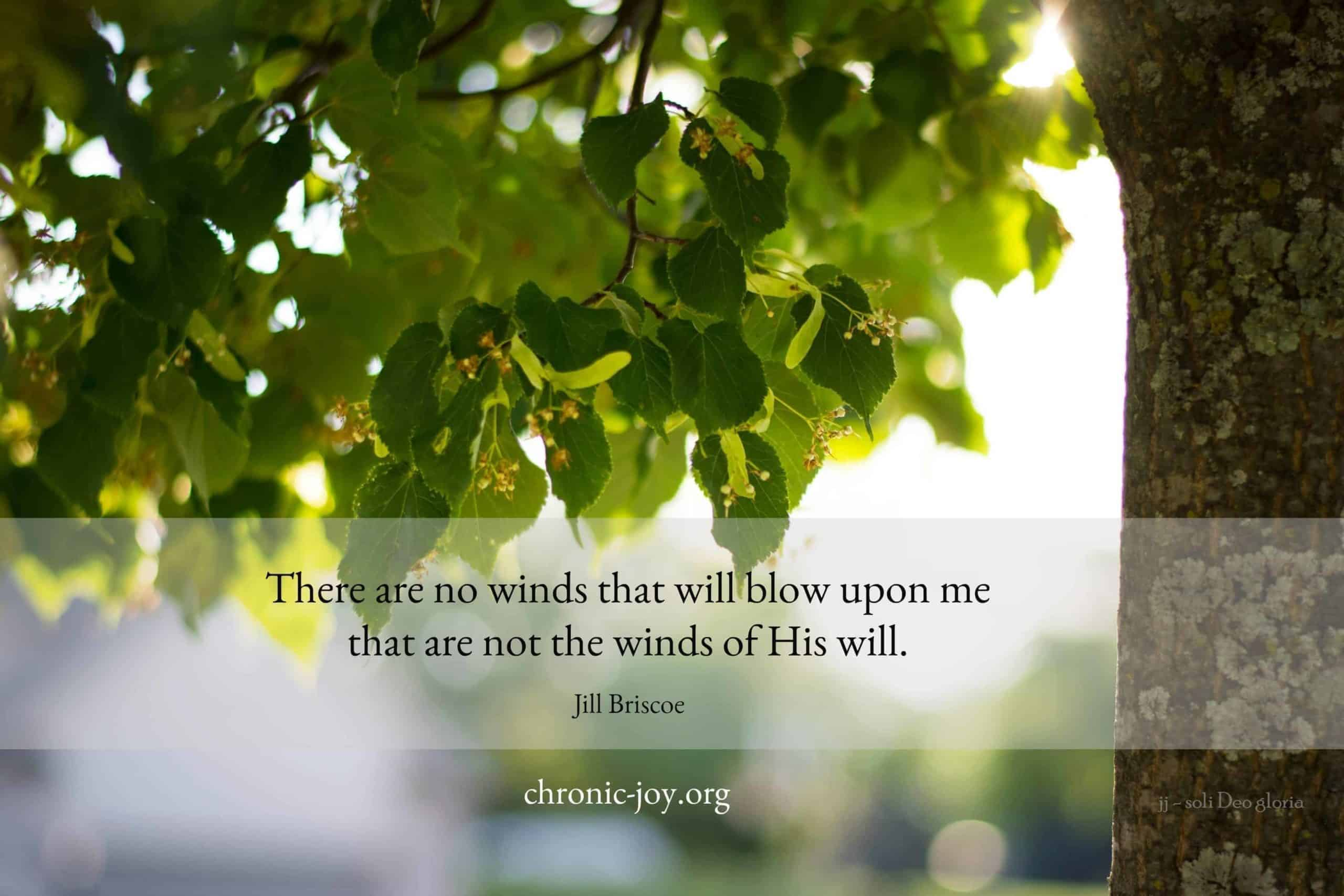 Winds of His Will