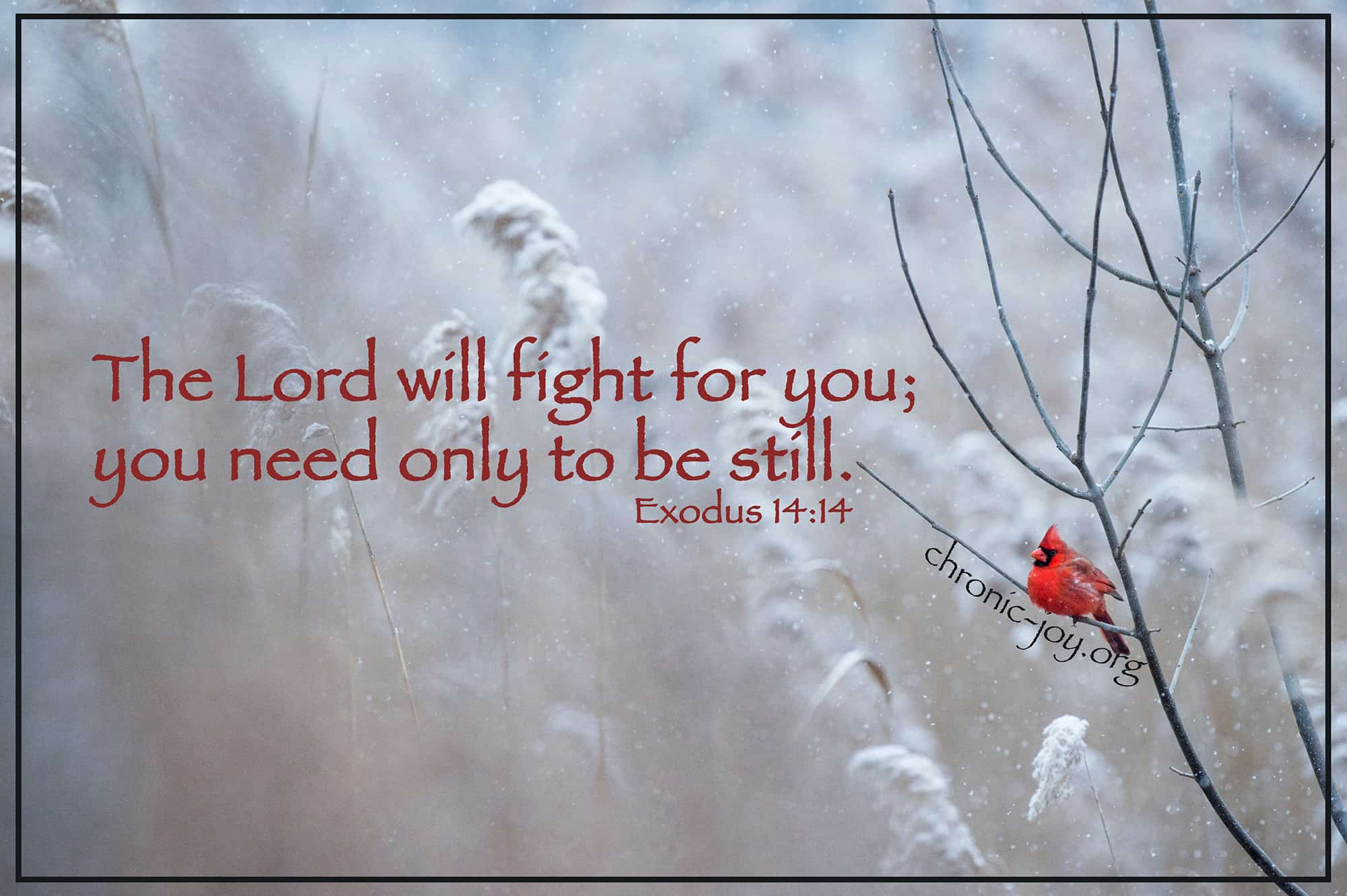 The Lord will fight for you; you only need to be still.