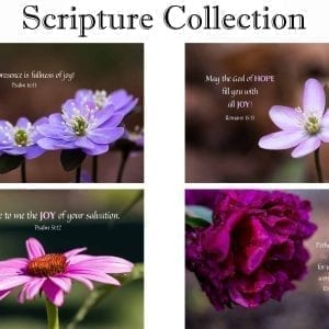 Scripture Collection