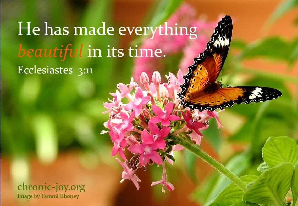 He has made everything beautiful in its time. (Ecclesiastes 3:11)